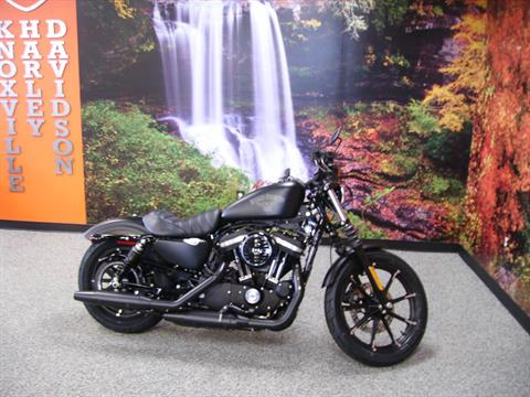 2016 Harley-Davidson Iron 883™ in Knoxville, Tennessee